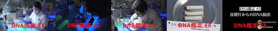 DNA鑑定-youtube official channel